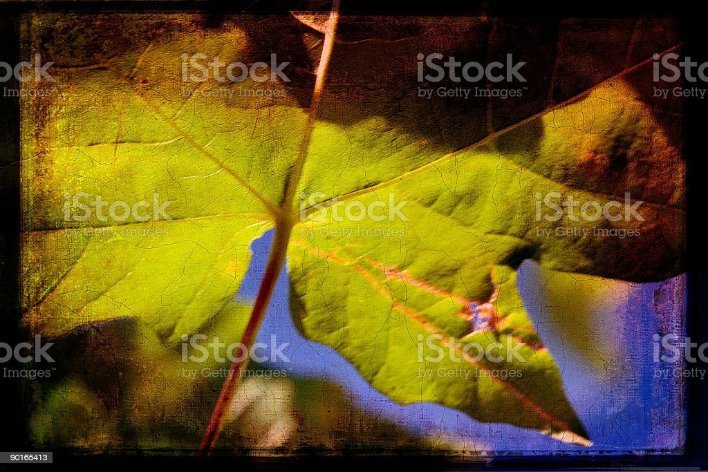 Aging Leaf royalty-free stock photo