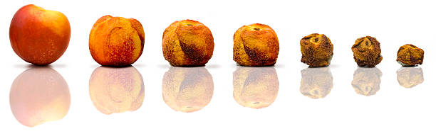 Aging process Aging process on a peach rotting stock pictures, royalty-free photos & images