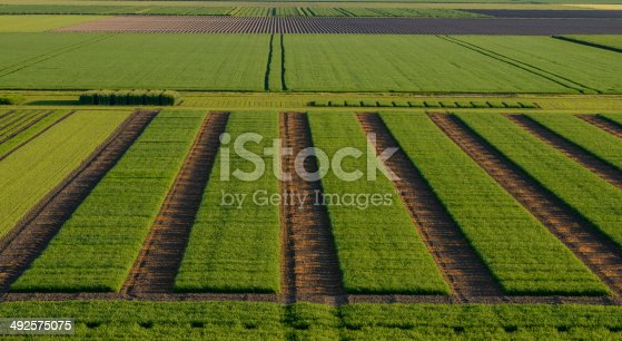 istock Agrcultural Test Fields 492575075