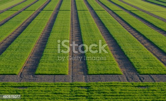 istock Agrcultural Test Fields 492575077