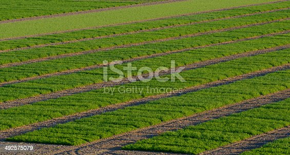 istock Agrcultural Test Fields 492575079