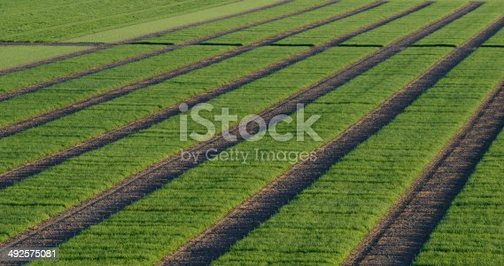 istock Agrcultural Test Fields 492575081