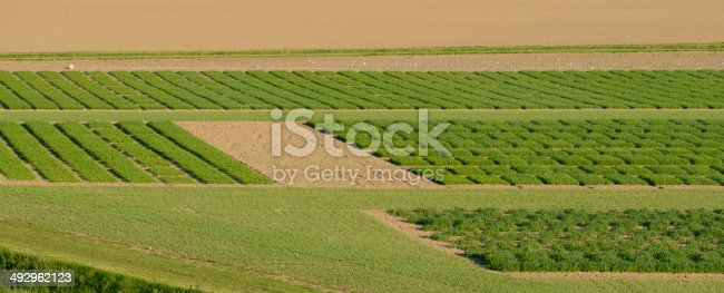 istock Agrcultural Test Fields 492962123