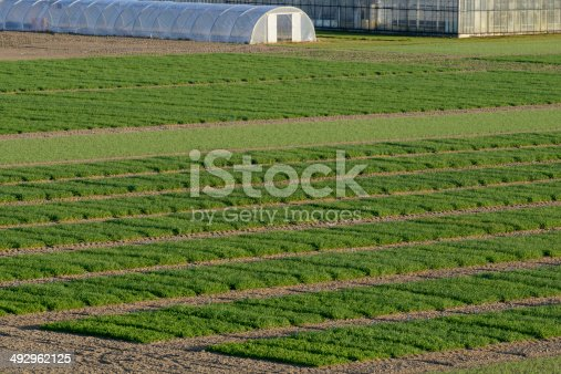 istock Agrcultural Test Fields 492962125