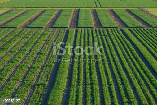 istock Agrcultural Test Fields 492962127