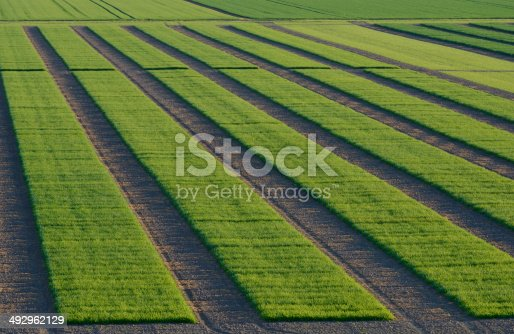 istock Agrcultural Test Fields 492962129
