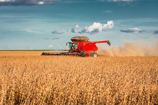 Agricultural harvester machine harvesting soybeans. Tapurah, Mato Grosso, Brazil.