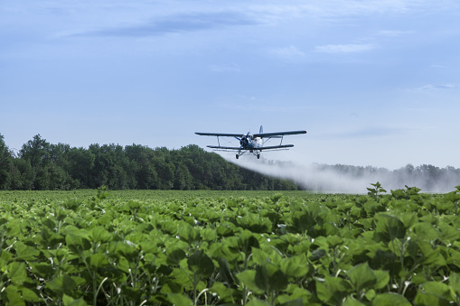 Agricultural airplane is flying under the sunflowers field and spraying water