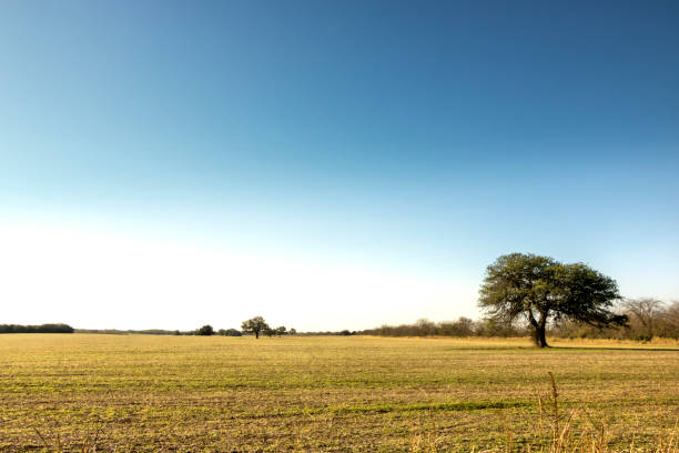 Agricultural and livestock field in the Humid Pampa, Córdoba, Argentina stock photo