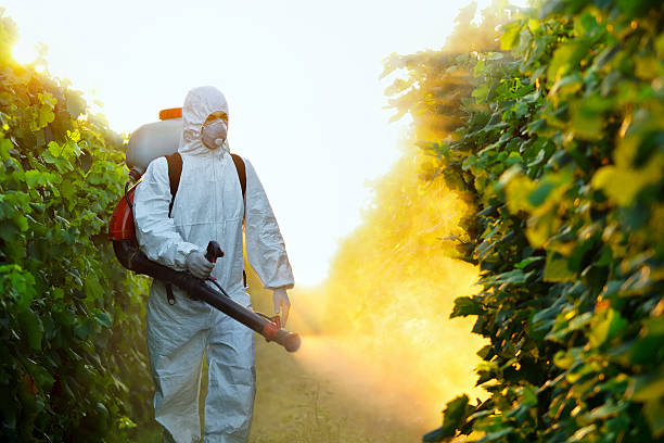 Agricultural chemistry Young worker splash grape with fungicides crop sprayer stock pictures, royalty-free photos & images