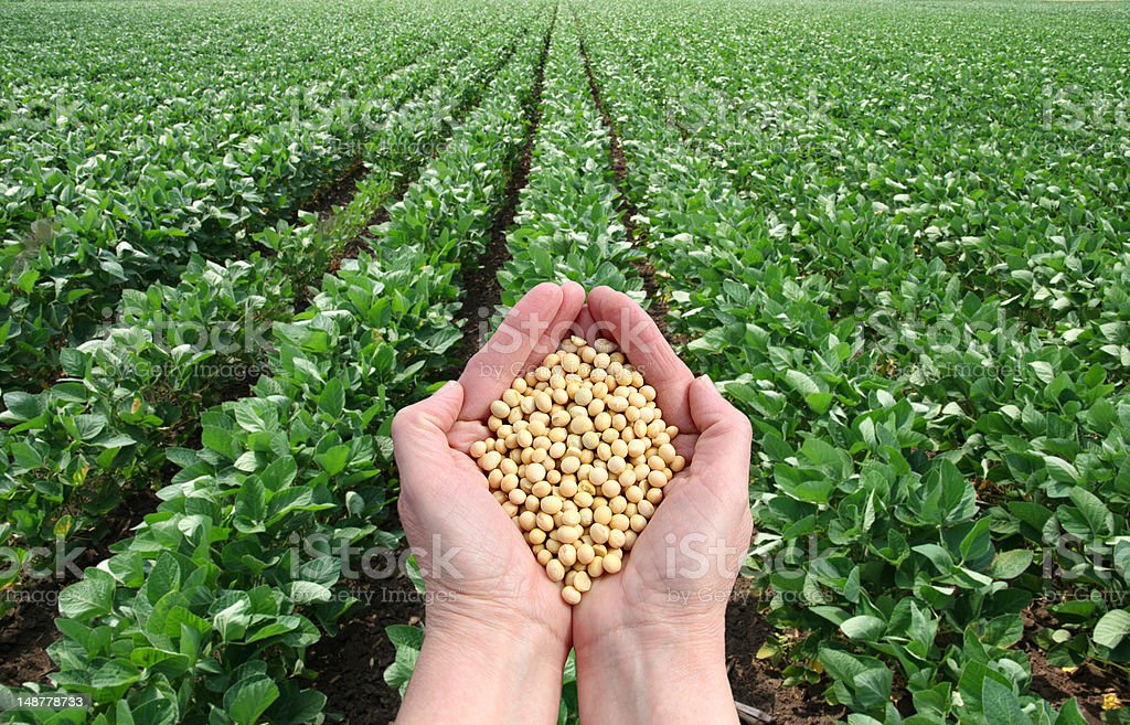 Agricultural concept stock photo
