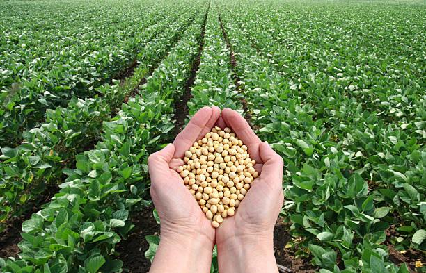 Landwirtschaftliche Konzept – Foto