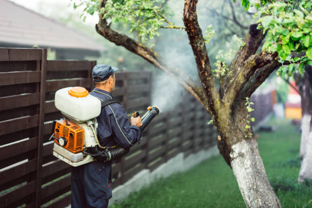 agricultural details - farmer working, spraying pesticides in fruit orchard stock photo