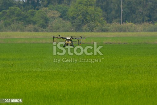 898449496 istock photo Agricultural drone working in rice field, Thailand, Smart Farm, Unmanned Aerial Vehicle. (UAV) 1095159826