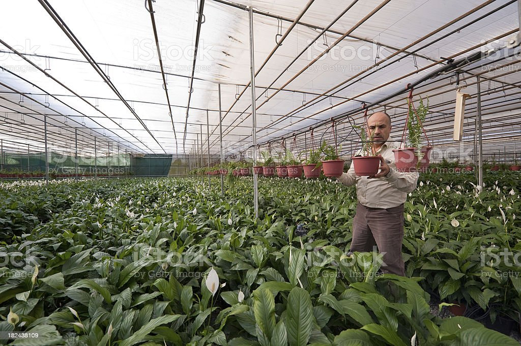 Agricultural expert does the greenhouse analysis royalty-free stock photo