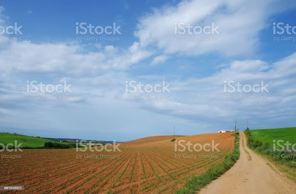 agricultural field at south of Portugal royalty-free stock photo