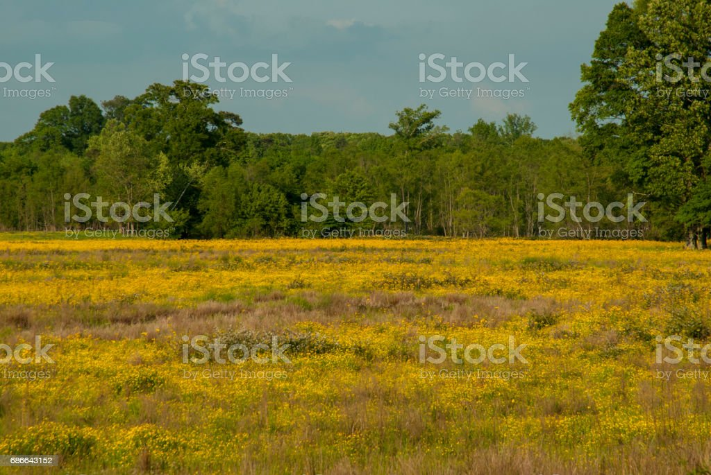 Agricultural Field, Natchez Trace, Mississippi stock photo