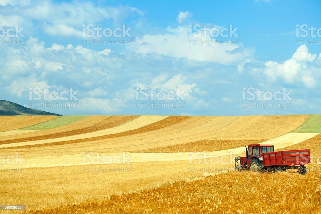 Landwirtschaftliches field  Lizenzfreies stock-foto