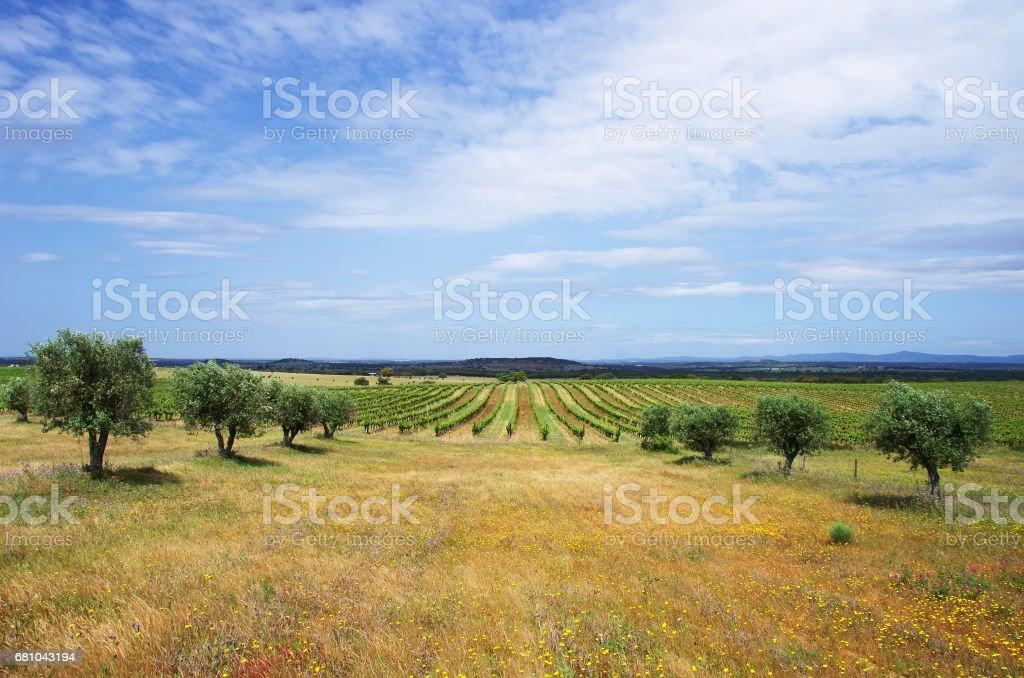 Landwirtschaftlichen Flächen, die Region Alentejo – Foto
