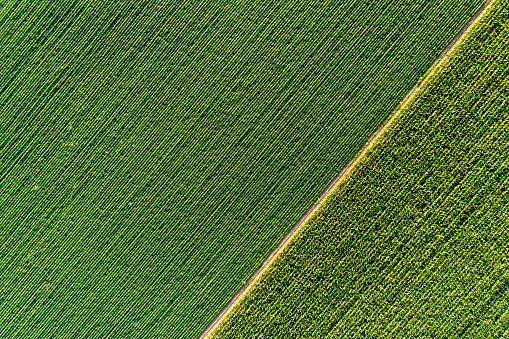 Agricultural fields from drone