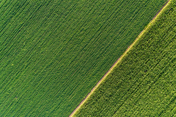 agricultural fields from drone - agricultural field stock photos and pictures