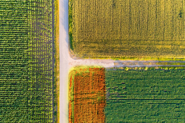 Agricultural fields scanned by thermal camera on drone stock photo