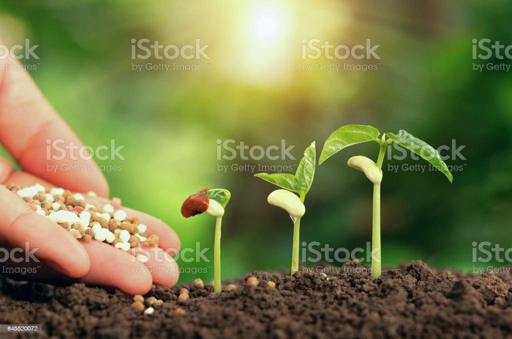 Agropecuaria mano alimentar planta fertilizante pise suelo en jardín - foto de stock