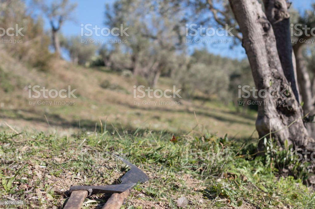 Agricultural hand tools on the ground in an olive orchard. stock photo