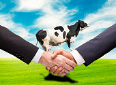 Two businessman handshaking front of the flying cow