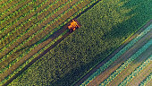 Agricultural harvesting at the last light of day, aerial view.