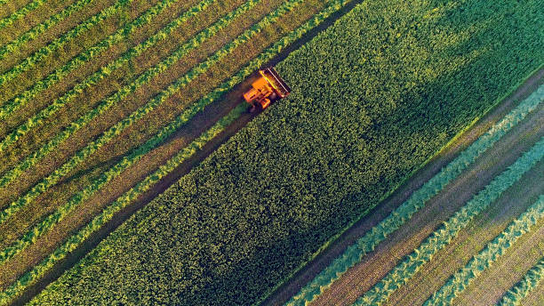 agricultural harvesting at the last light of day, aerial view. - agriculture stock pictures, royalty-free photos & images