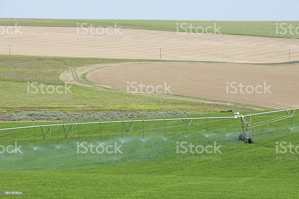 Agricultural irrigation in crop circle stock photo