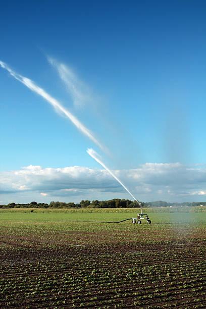 Landwirtschaftliche Bewässerung im Feld – Foto