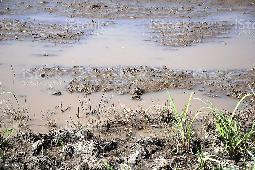 Terreni agricoli dopo pioggia foto stock royalty-free