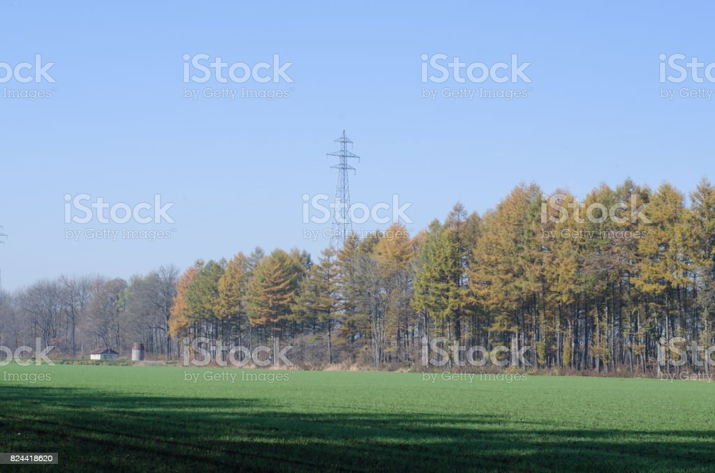 Agricultural land and windproof forest stock photo
