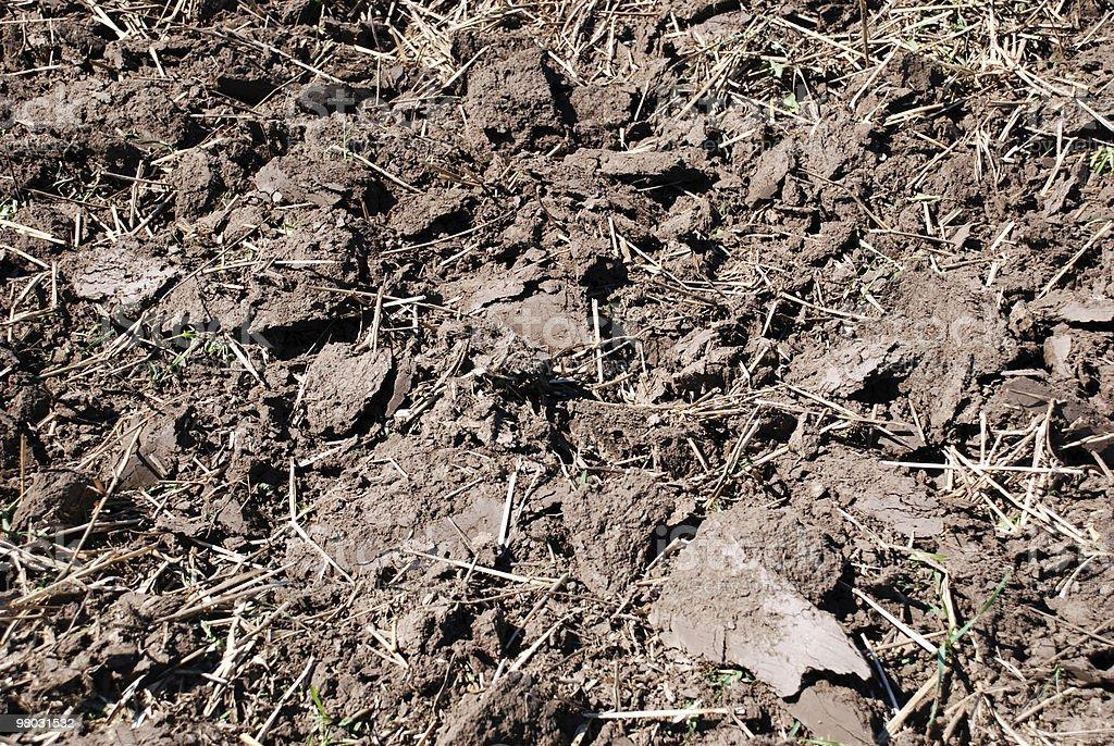 Terreni agricoli close-up foto stock royalty-free