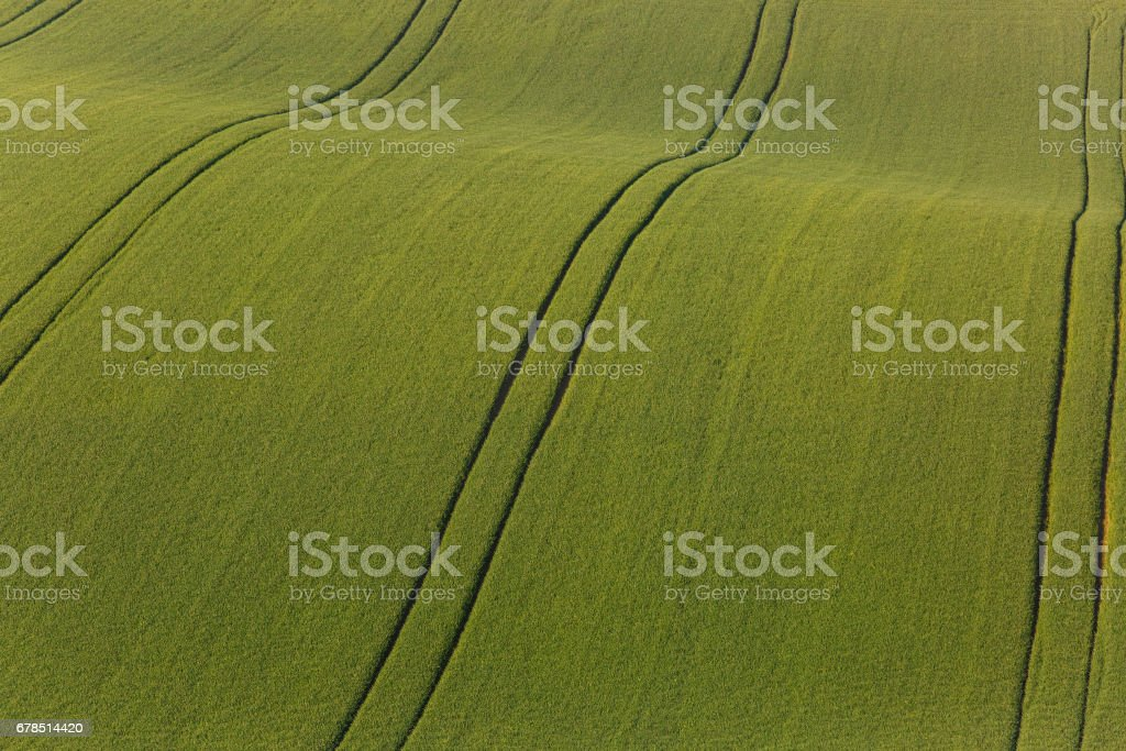 Agricultural land with fresh crops stock photo