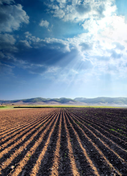 agricultural landscape of empty plowed field stock photo
