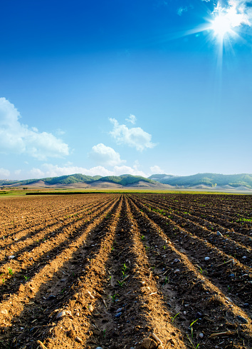 agricultural landscape of empty plowed field over sunny blue sky