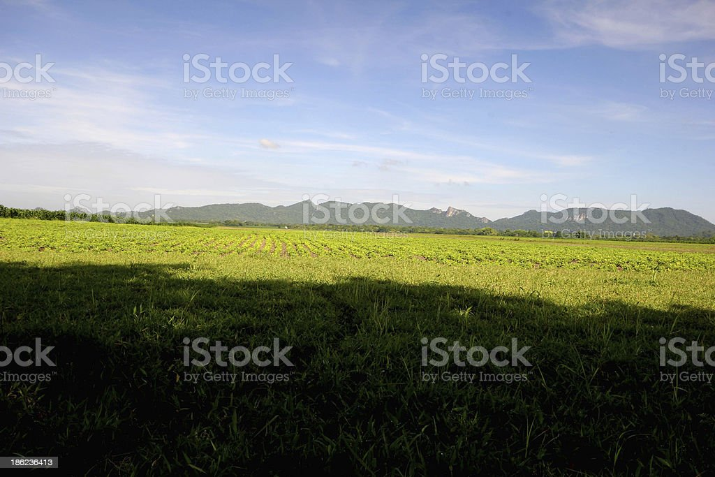 Agricultural landscape. royalty-free stock photo