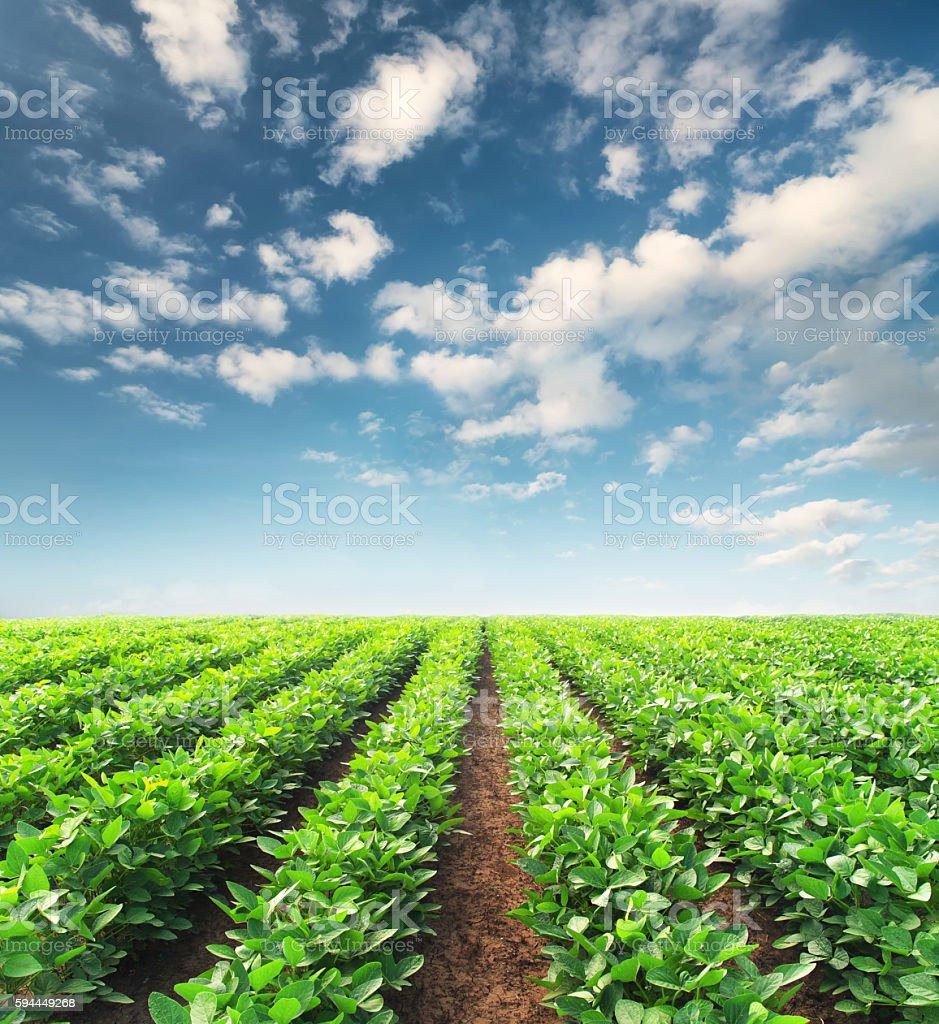 Paisaje agrícola  - foto de stock