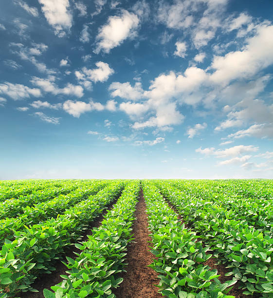 agricultural landscape - organic farm stock photos and pictures