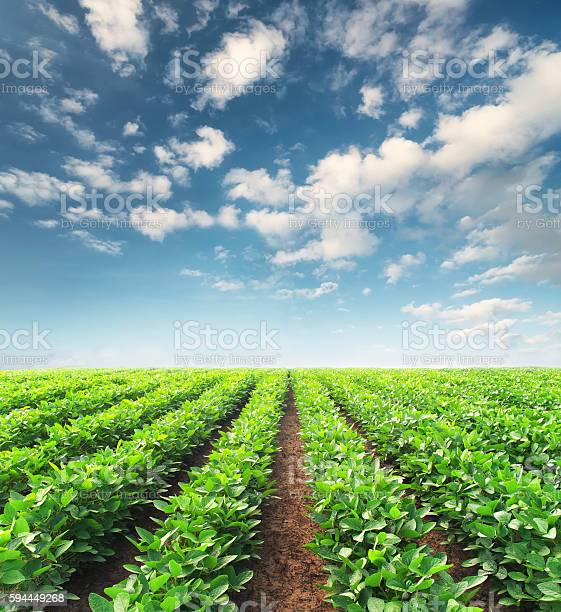 Agricultural Landscape Stock Photo - Download Image Now
