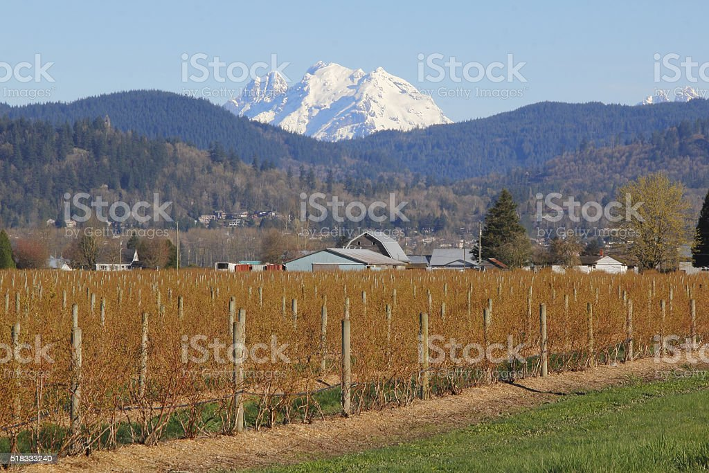 Agricultural Landscape with Mountain stock photo
