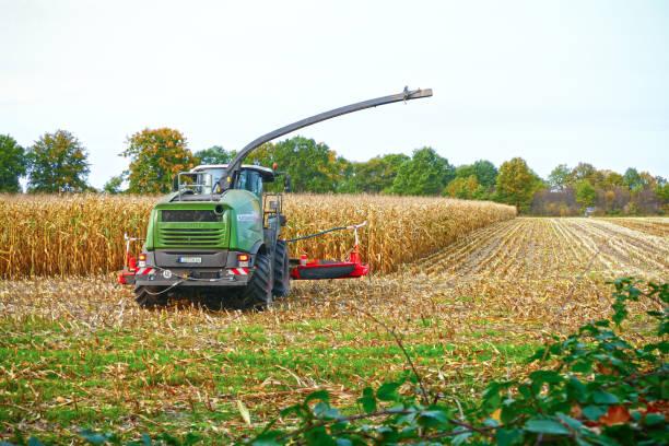옥수수 수확에 농업 기계 - 브란덴부르크 주 뉴스 사진 이미지