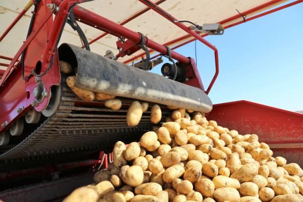 Landwirtschaftlichen Kartoffelernte – Foto