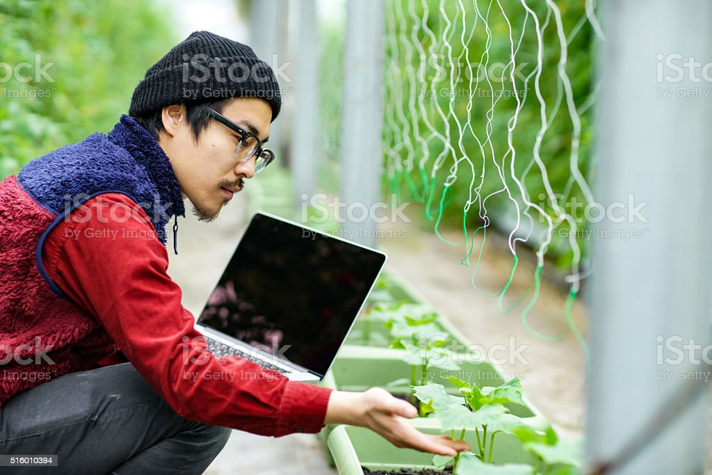 Agricultural researcher using a laptop computer in a greenhouse environment stock photo