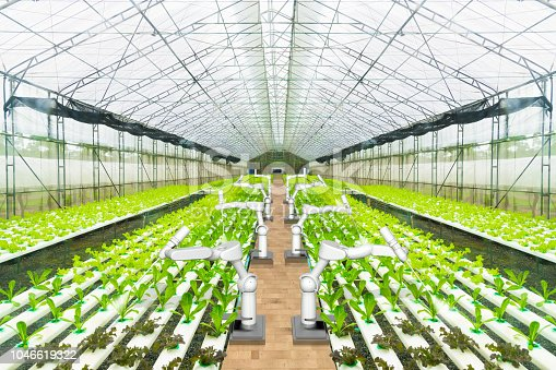 istock Agricultural robot water spraying or detect weed in hydroponic garden, Technology smart farm concept 1046619322