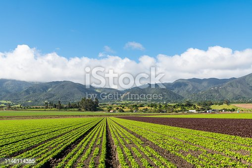Field of green and red lettuce in Salinas Valley, California