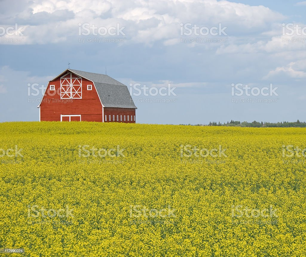Agricultural Scene royalty-free stock photo